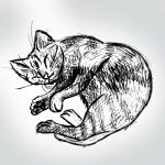 piccoloarietino-illustrazioni